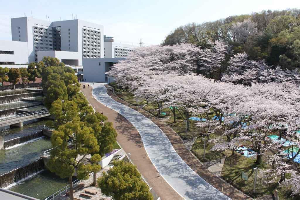 中央大学多摩キャンパスの花見スポット「桜広場」 -- 毎年約300本の ...