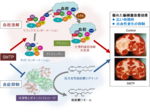 東京農工大学発「脳梗塞を治療する新薬候補」の臨床第II相試験を開始