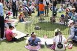 大学に動物園が1日限定オープン! -- 大阪成蹊大学が6月3日に地域交流イベント「動物とふれ合う写生会」を開催