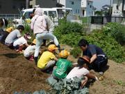 【H28年度】収穫体験①.JPG