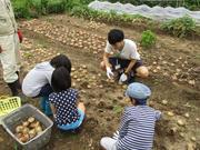 【H30年度】収穫体験.JPG