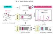 図3   BLOTCHIP(R)-MS法.png