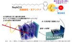 青山学院大学と静岡大学がレアアースの直線偏光発光の仕組みを膜型ソフトクリスタルにより解明