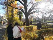 4_sakura.jpg