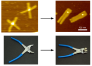 DNAオリガミ.png