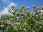 【武蔵学園】樹木マップを公式Webサイトで公開