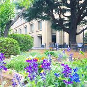 青山キャンパス.JPG