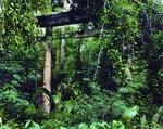 神奈川大学 非文字資料研究センター「帝国日本」の残影 海外神社跡地写真展を横浜市民ギャラリーにて開催~戦前の日本人はなぜ海外に神社を建てたのか?~