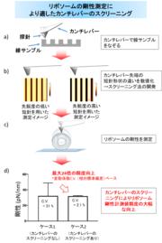 図 研究内容と成果の概略図.png