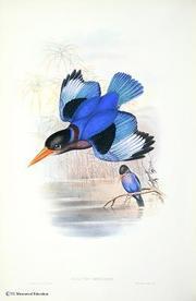 博物館:A1 ジャワショウビン『アジア鳥類図譜』第1巻.jpg