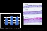 【図2】FDGの取込みと培養日数(増殖・分化)の関係.png