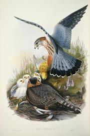 博物館:G1 コチョウゲンボウ『イギリス鳥類図譜』第1巻.jpg