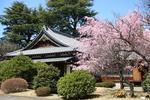 聖心女子大学が重要文化財「旧久邇宮邸」を一般公開 -- 和風基調で建築された宮家本邸の唯一の現存例