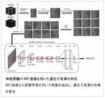 脳のMRI画像だけから脳腫瘍の遺伝子変異を推定するAI技術を開発 -- 大阪大学