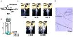 神奈川大学 工学部 岩倉いずみ准教授(化学教室・工学研究所)らの研究グループの論文がNature姉妹紙の『Communications Chemistry』に掲載されました