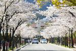 関西学院大学 西宮上ケ原キャンパス周辺が西宮市の景観地区に指定されました