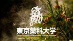 東京薬科大学の安達禎之准教授らがスギ花粉症の発症に関わる花粉内アジュバントと受容体について解明 -- スギ花粉症の新たな治療法の開発に期待