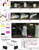 紙のソフトロボット 構造や動きの印刷に成功 -- インクジェット印刷で紙が自律的に折り紙へ --