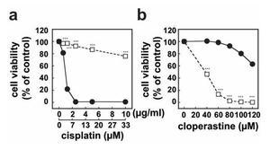 咳止めの既存薬が抗がん剤耐性のがん細胞を傷害することを発見 ~がん治療に新たな光、承認薬の転用で早期適用に期待~ -- 東京工科大学応用生物学部