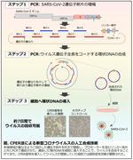 数ヶ月を2週間に! 迅速・簡便な新型コロナウイルス人工合成技術を開発 -- 新型コロナウイルス関連研究の加速化に貢献