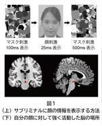 【大阪大学】自分の顔を優先処理する脳の仕組みを発見 -- 潜在意識に入った自分の顔がドーパミン報酬系を駆動