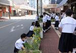 【樟蔭中学校】コロナ禍だからこそ笑顔と元気を届けたい!中学生が育てた花が、地域の図書館や商店街に並ぶ