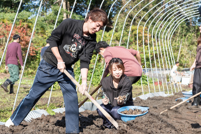 絶滅の危機から救われた「吹田くわい」を今年も収穫・販売 -- 大阪学院大学