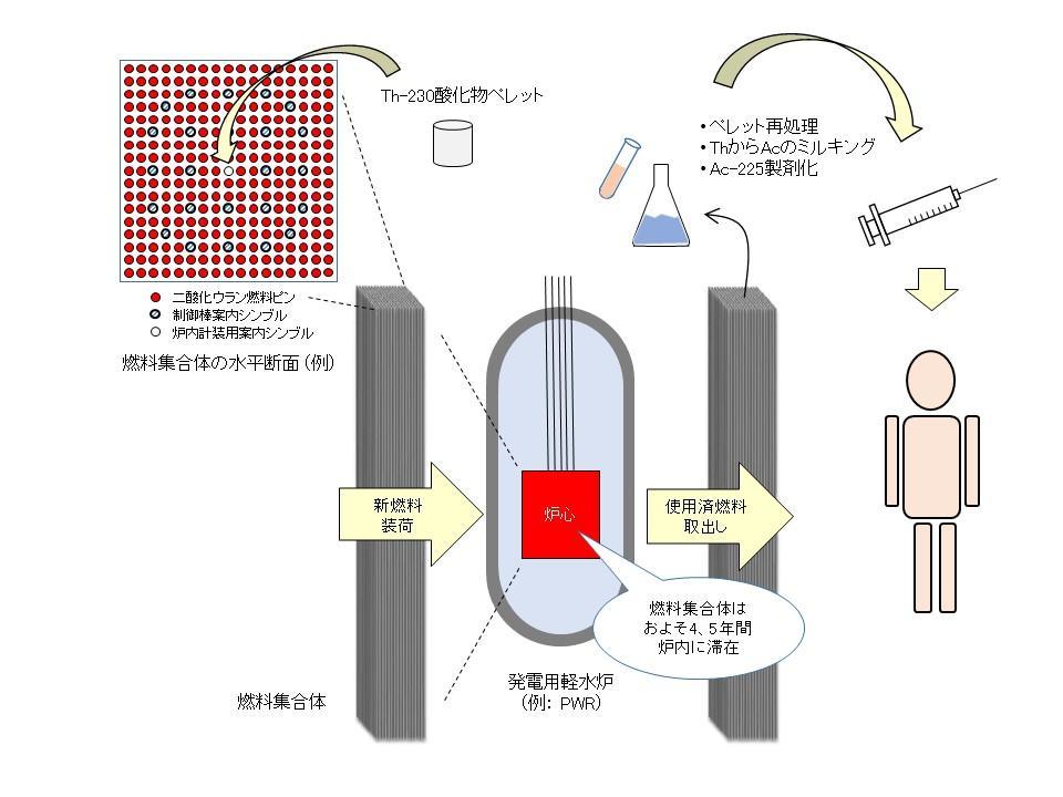 がん細胞を集中侵撃するアクチニウム225の量産技術を考案 -- 商用原子炉でトリウムを熟成、半永久的な供給を可能に --