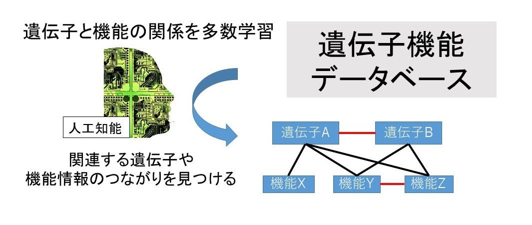 人工知能を用いて遺伝子とその機能の相互関係を見つける手法を開発 -- ゲノム創薬への応用に向け学外研究機関と共同研究を開始 -- 東京工科大学応用生物学部