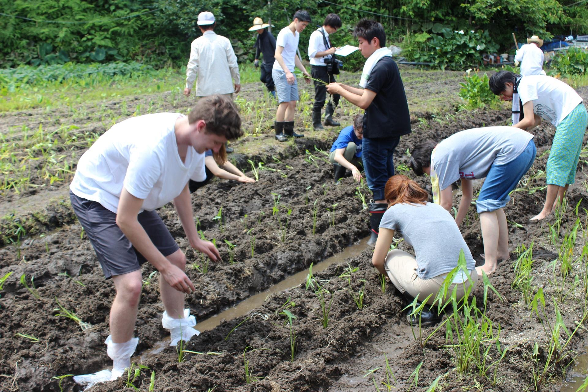 大阪学院大学の学生が「第9回吹田くわい祭り」を企画・開催