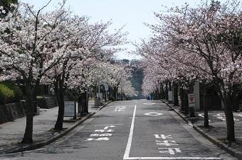 関東学院大学 桜まつり 開催 -- 近隣地域との交流会として -- 4月1日(土)横浜・金沢文庫キャンパス