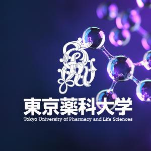 東京薬科大学の吉川大和准教授らがラミニンβ2鎖の変異による腎障害メカニズムについて解明 -- 遺伝的要因による蛋白尿の治療法開発に期待
