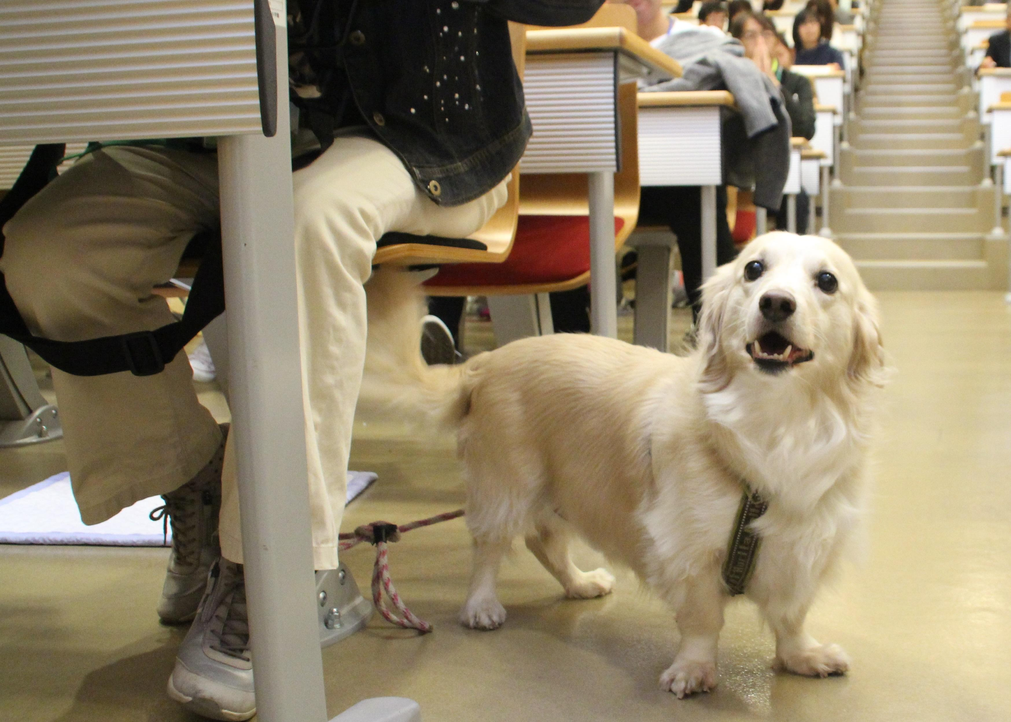 ~愛犬と一緒に参加して健康について学ぼう!~公開講座「ヒトがイヌと歩くということ」及びドッグ・ウォーキングフェスティバル開催