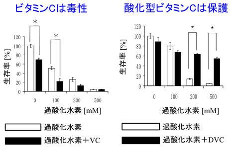 ビタミンCによるがん転移の抑制メカニズムに新発見 還元型と酸化型で生理作用に違い 東京工科大学応用生物学部