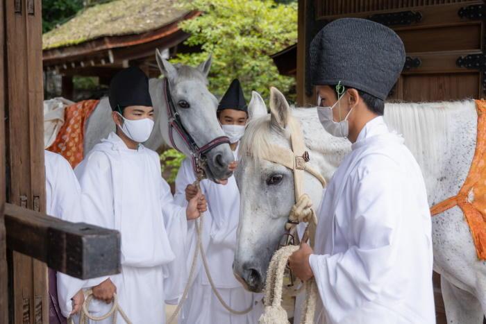 世界遺産上賀茂神社の神馬(しんめ)が交代する「神馬奉献退任奉告祭」で、京都産業大学馬術部が馬引き役を担当