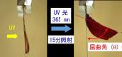 東京工芸大学工学部の比江島俊浩教授が「液晶ゲル、液晶ゲルの製造方法、液晶ゲルの設計方法」にかかる特許を取得 -- 光を使用して「液晶ゲル」を自在に曲げる技術