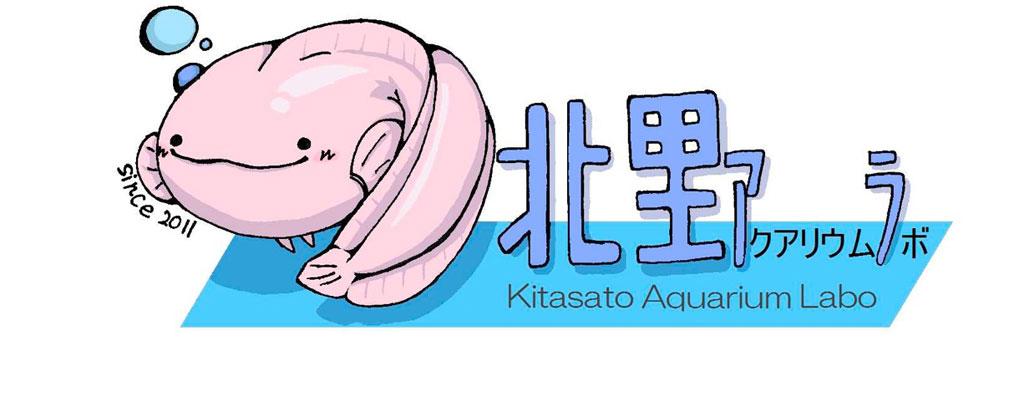 北里大学相模原キャンパスにミニ水族館「北里アクアリウムラボ」がオープン――8月27日のオープンキャンパスでは「夏」をテーマにした企画展