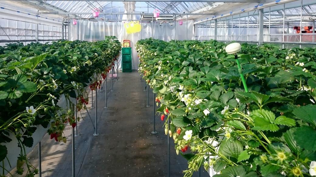 いちごの収穫量増大を可能にする圃場全体のモニタリングシステムの研究成果を展示。金沢工業大学が産学連携で進めるイノベーション創出の一端をご覧ください