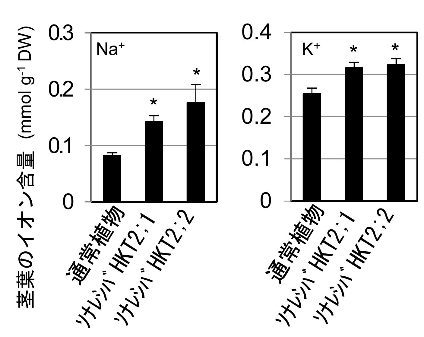 植物の耐塩性メカニズムに重要な役割を果たすタンパク質を発見。低カリウム条件での農業などに応用の期待。東京工科大学応用生物学部