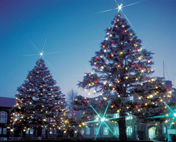 立教大学が澄んだ夜空に輝くクリスマスツリー点灯――12月1日~1月6日 (池袋・新座両キャンパス)