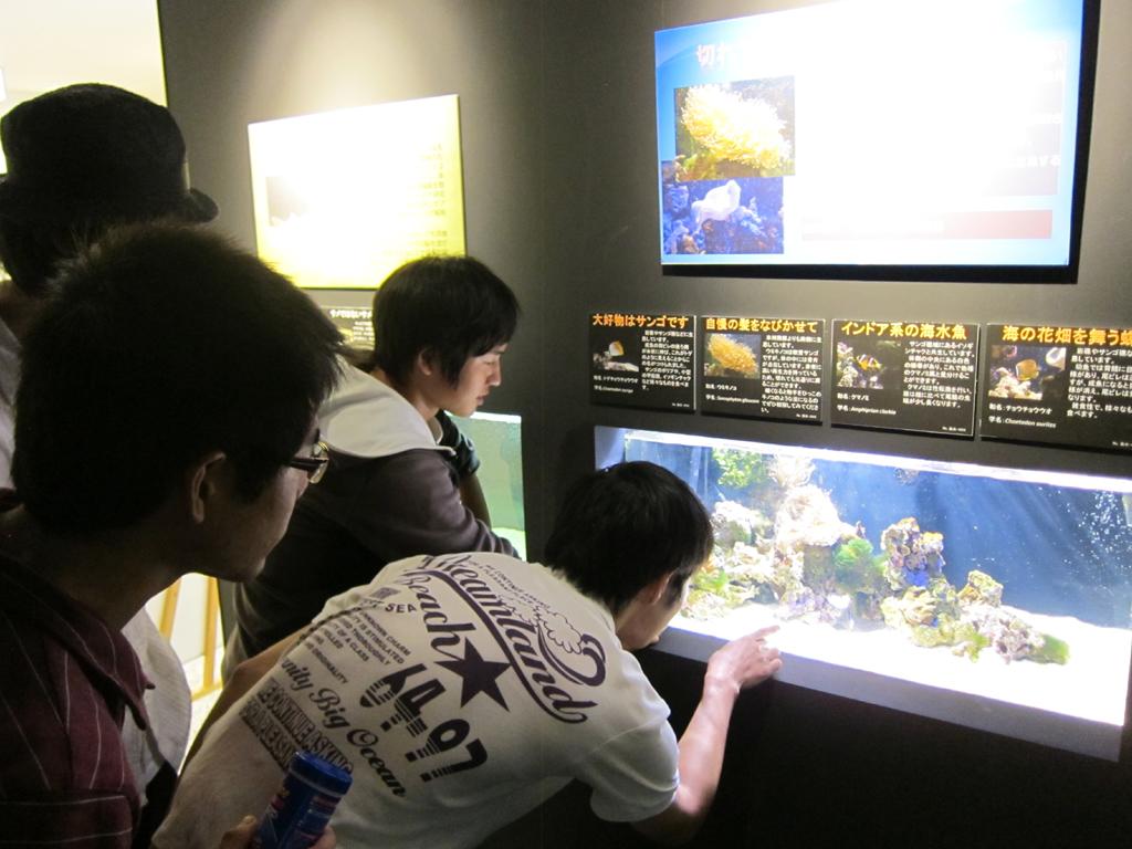 川にいるクラゲ?東南アジアに生息する珍しいクラゲを世界初展示!!――北里大学が11月3日からアクアリウムラボで
