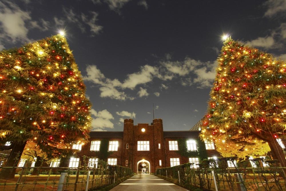 立教大学池袋キャンパスで12月4日(火)に、クリスマスツリー・イルミネーション点灯式を開催――樹高約25メートルの2本のヒマラヤ杉に光がともる