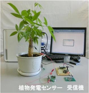 立命館大学が、植物発電によるワイヤレス植物モニタリングシステムを開発――電池を用いずに植物の健康状態のチェックが可能に