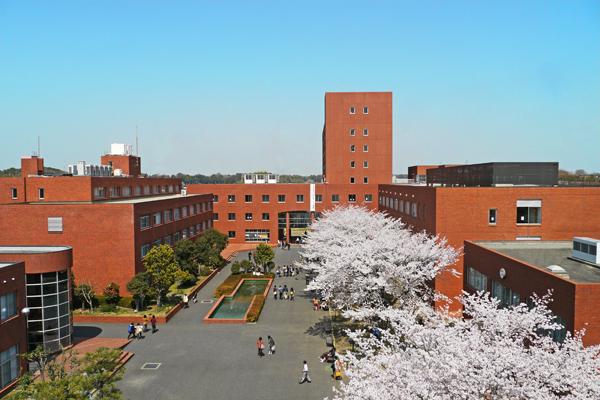 赤レンガの校舎を桜が華やかに彩る――東洋学園大学流山キャンパス