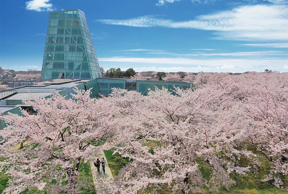 キャンパスにある花の名所――日本工業大学の「桜の広場」