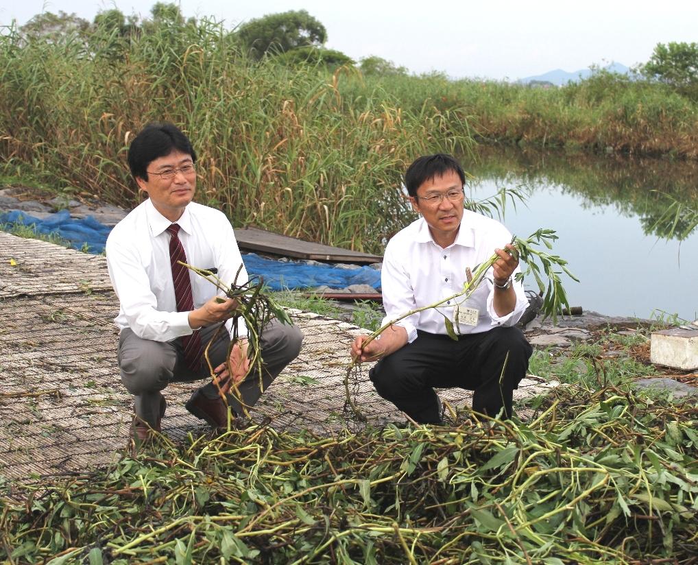 立命館大学と守山市が共同で「琵琶湖の水草堆肥化事業」をスタート~厄介者の水草を堆肥化し、有機農法に活用~