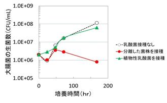 東京工科大学応用生物学部の西野智彦准教授らの研究チームが乳酸菌を用いて、「浅漬け」による食中毒を防ぐ手法を発見
