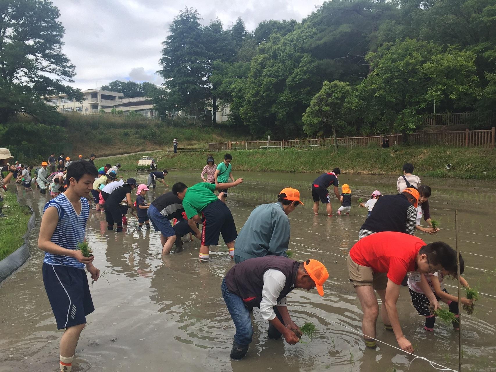 大阪学院大学の学生が農作業体験農園「ふれ愛農園」でボランティアを実施