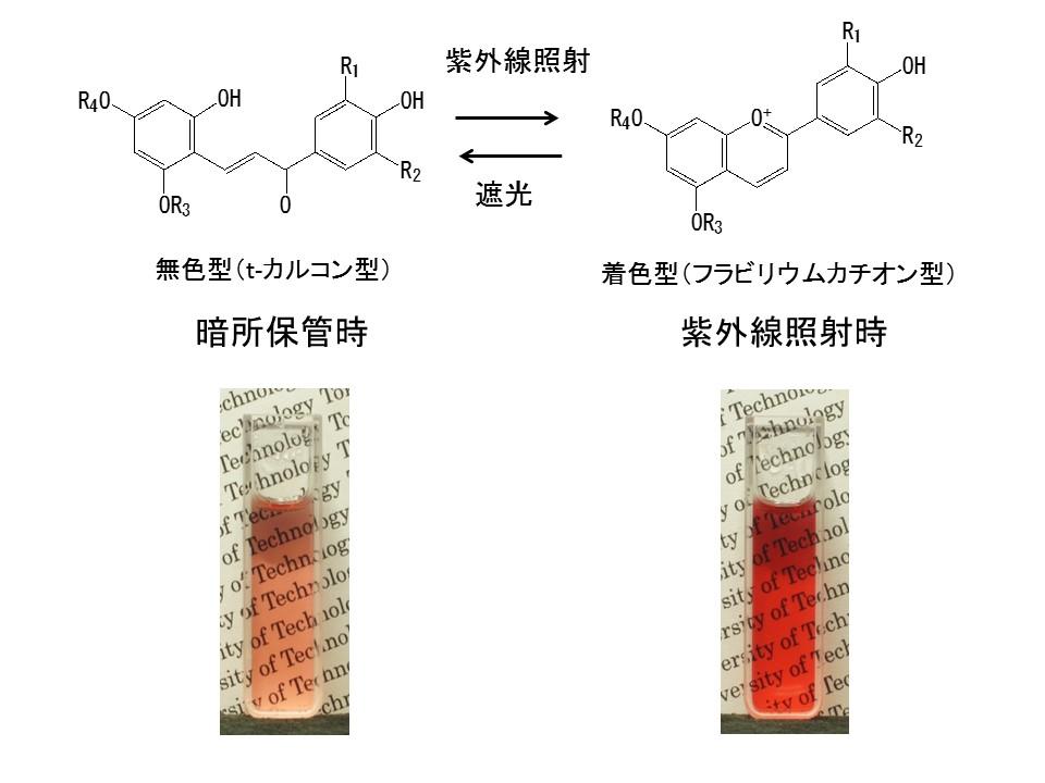 天然色素のみを用いた「フォトクロミック材料」の開発に成功 -- 化粧品や食品などへの応用も可能に -- 東京工科大学