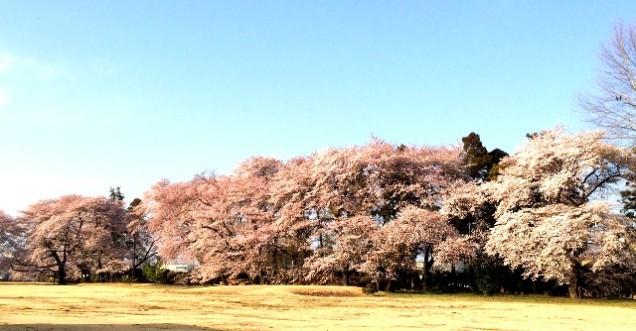 大妻女子大学が狭山台キャンパスを、4月3日(日)10~15時まで近隣住民に一般開放